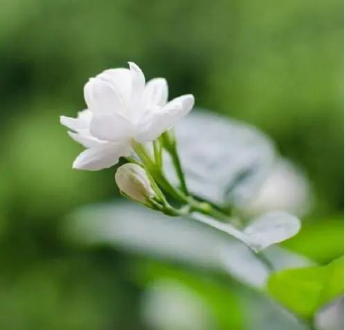 16句佛语禅心经典语录图片