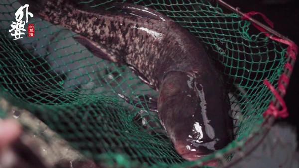 手工鱼丸,一块纱布搞定鱼刺,Q弹爽滑有嚼劲 美食做法 第2张