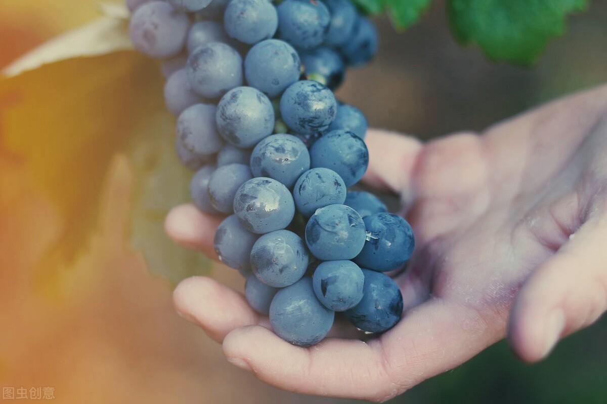 葡萄很甜,糖尿病人不能吃?她糖尿病9年常吃葡萄,血糖稳定达标