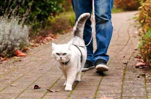 猫咪冷知识,第二集:猫咪可以牵出去遛弯吗