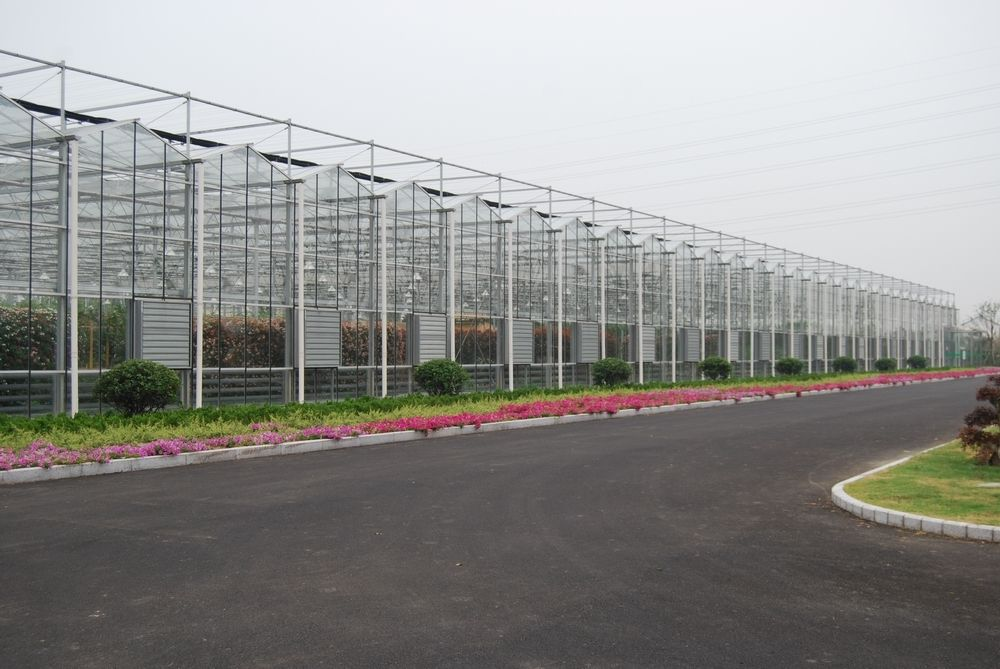新兴的荷兰智能玻璃温室顶部玻璃有啥奥妙?大棚玻璃价格还差很多