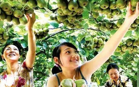乡旅规划:农业园区如何向农业旅游景区转变?
