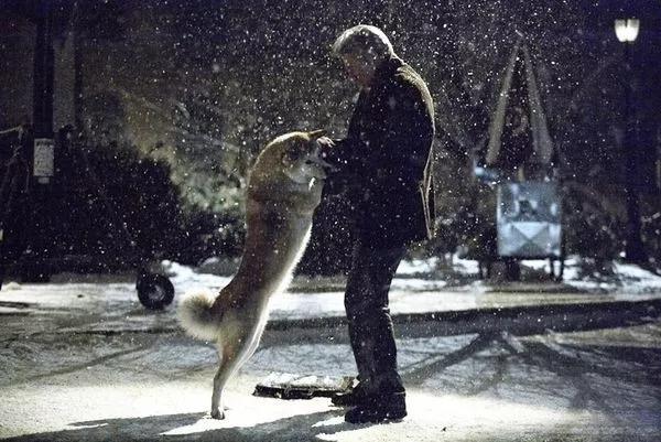 忠犬被迫流浪4年 再见主人后它却转身离去 故事