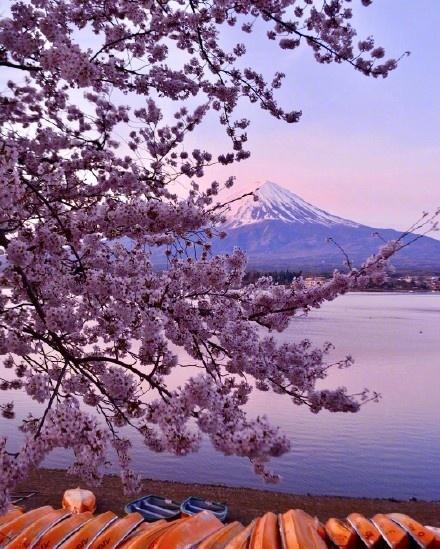 你不了解的日本:日本冷知识