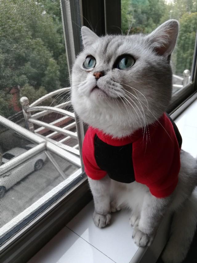 公猫绝育的利与弊