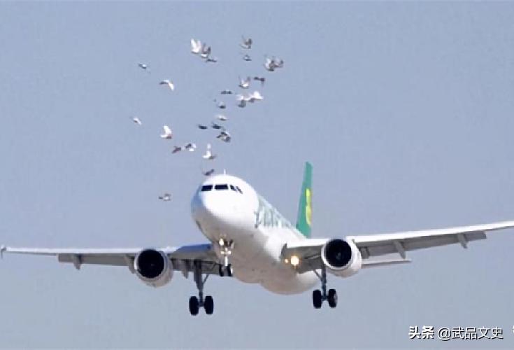 100年前美国放生60只鸟,如今每年损失约10亿美元,人民苦不堪言