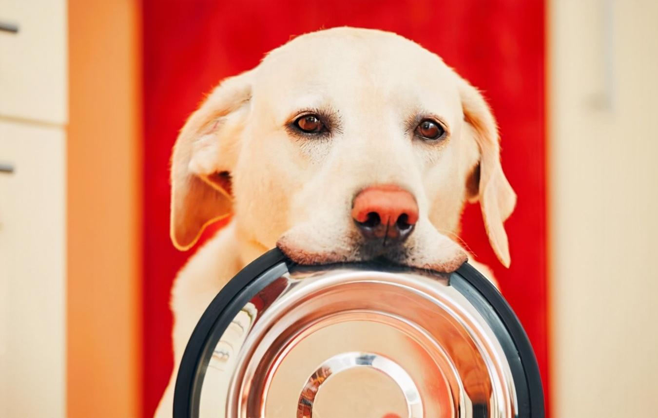 狗狗想吃东西的几个表现,铲屎官:藏也藏不住