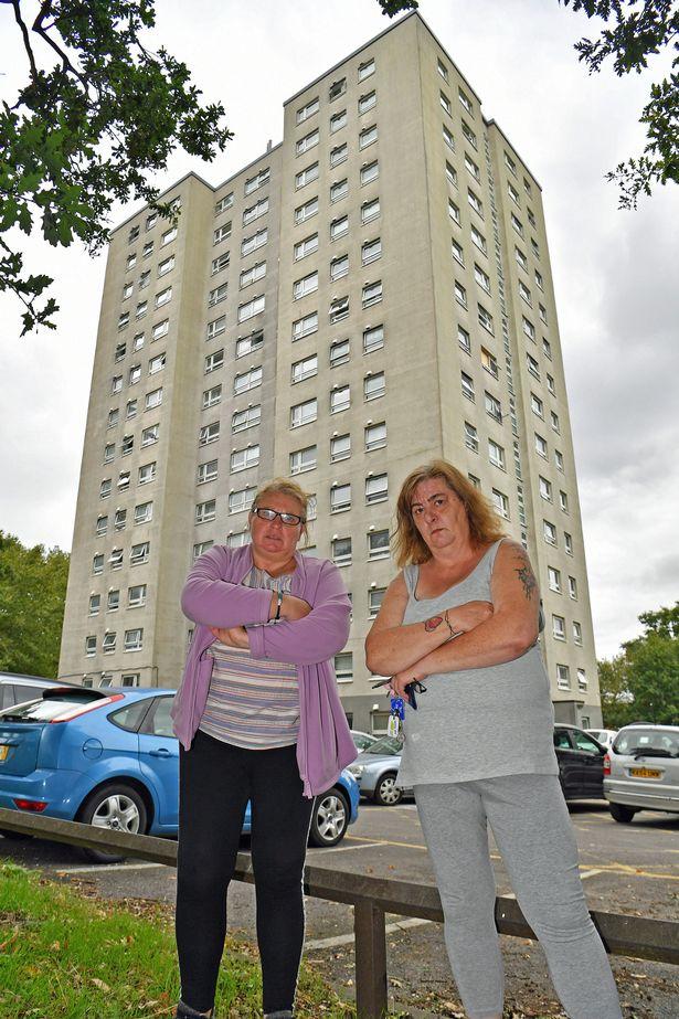美国公寓四处出没像猫一样大的老鼠,还疯狂啃墙,居民恐慌不已