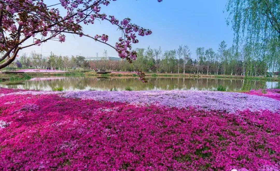醉美人间四月天!这是济南章丘的四月美景
