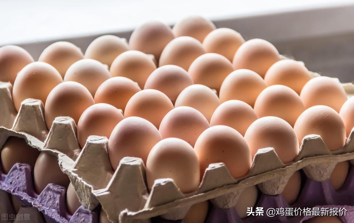 鸡蛋最新价格今日价(一万只蛋鸡养殖成本与利润)