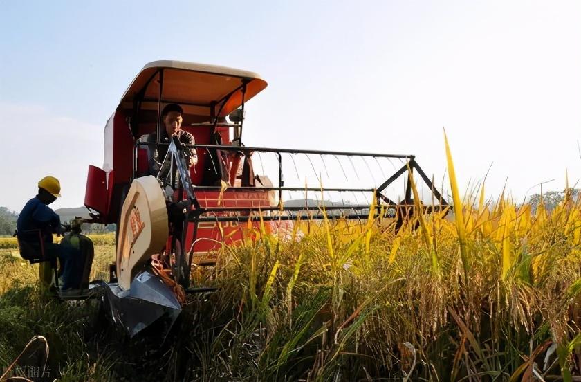 水稻大涨,到底啥原因?后市能达到多少钱1斤?附:最新