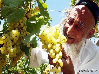 新疆特产有哪些值得购买(新疆特产有哪些药用植物)