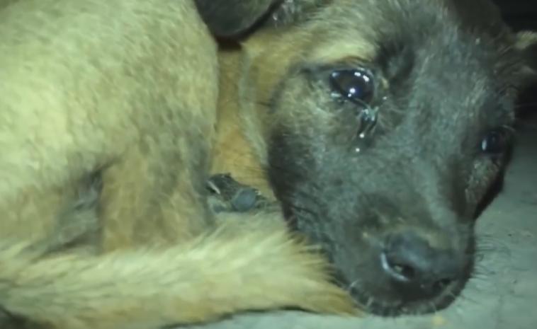 流浪狗含泪蜷缩在街头,给它食物也不吃,狗狗:你能收养我吗?