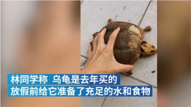 武汉一大学生返校,养在宿舍的乌龟仅剩骨架,网友:儿子变干儿子