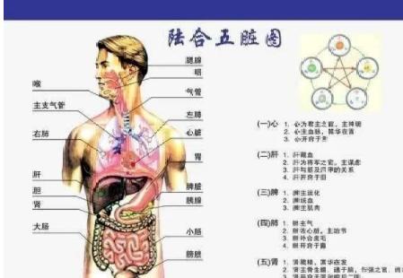 美国宣布:中医经络被发现,世界医学将进入新时代 中医养生 第3张