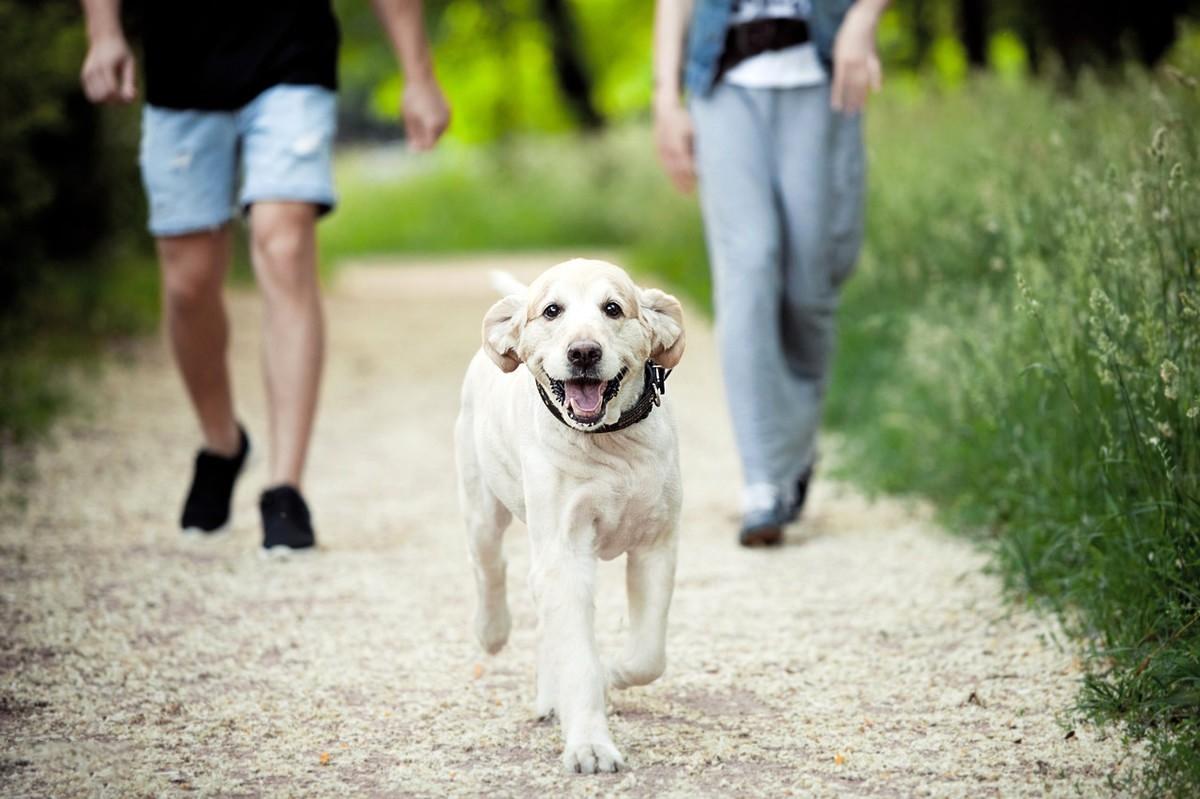 带狗狗外出,它总是回头看主人,是什么意思?