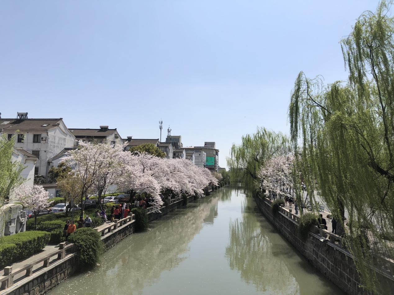 活动回顾|春来常熟,花开虞城,这个春天一定要来赏花呀