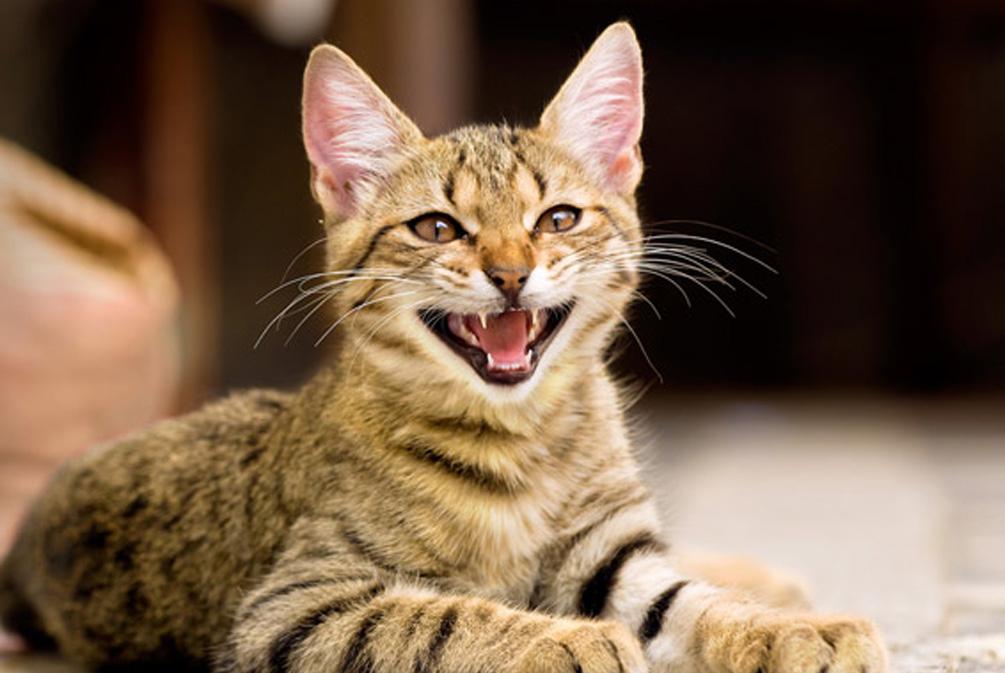 猫咪行为解密:这4种常见行为帮你读懂猫咪内心的真实世界