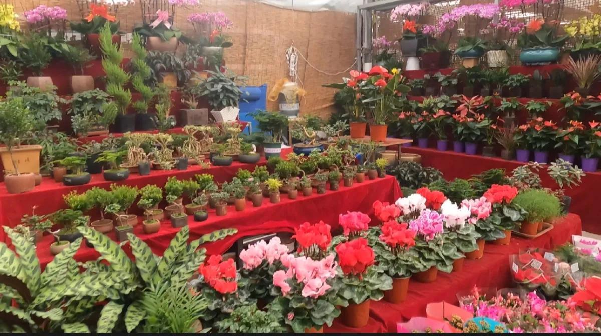 买花买鸟买观赏鱼去这里就对了,西安的长乐花卉博览园你了解吗