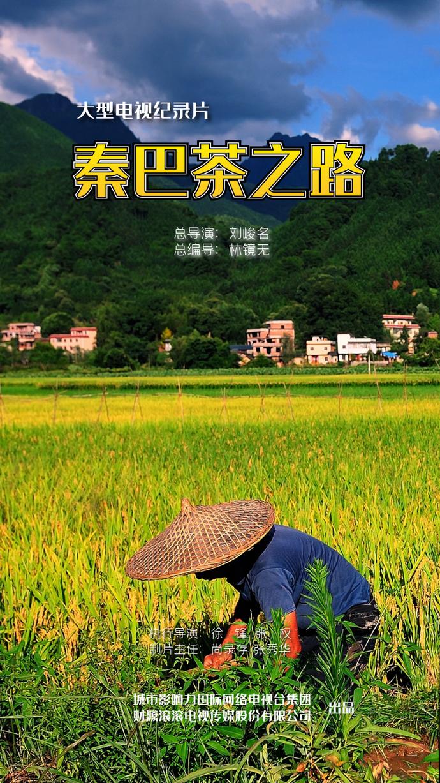 大型电视纪录片《秦巴茶之路》摄制组完美收官