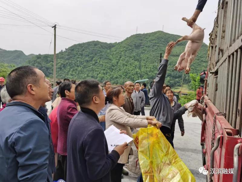 引领发展看汉滨系列之六:畜牧业全市第一