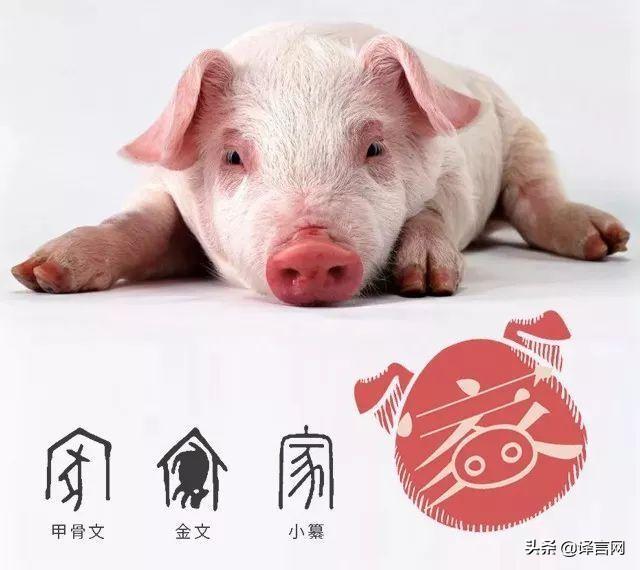 猪年会给你带来好运吗?十二生肖在猪年的运势预测