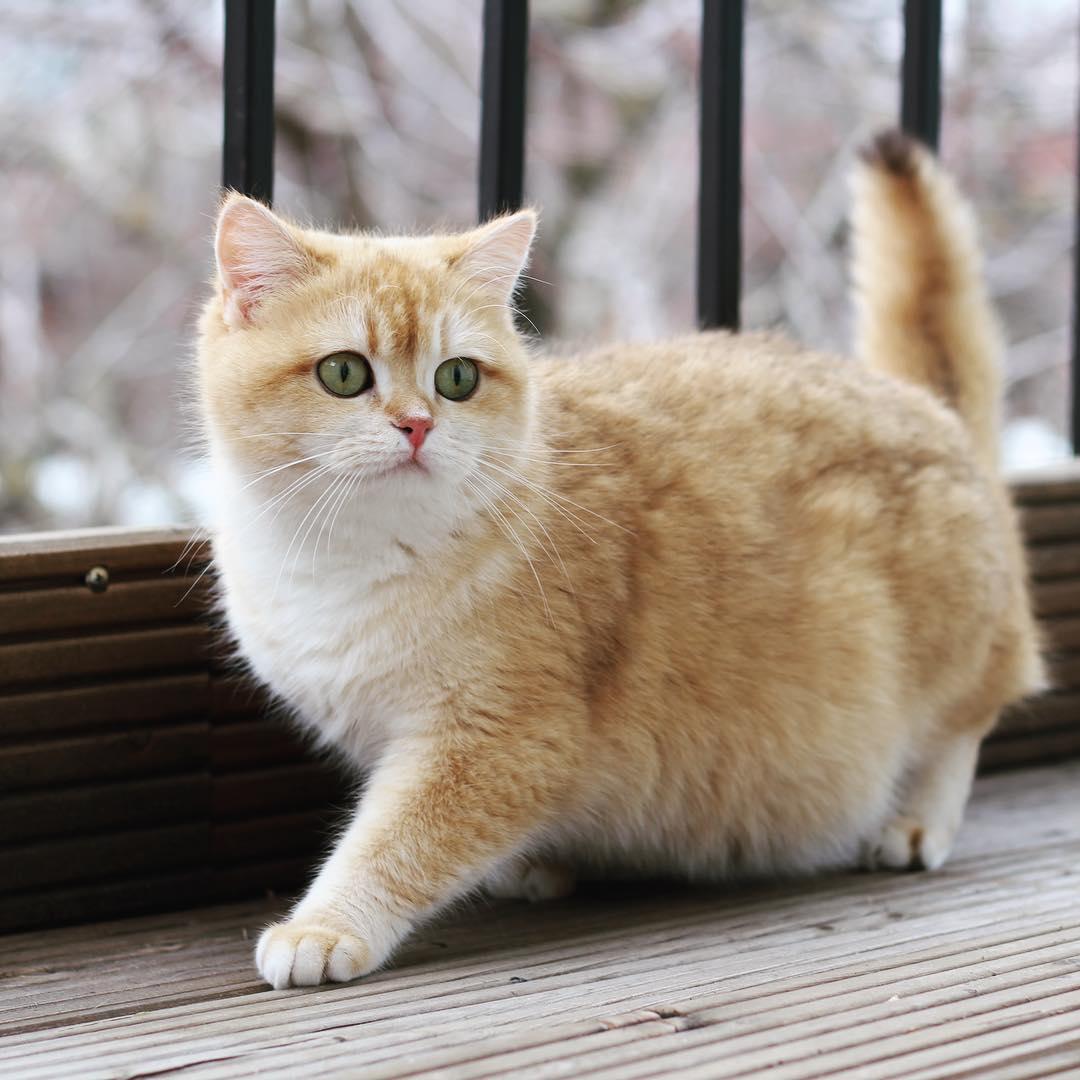 """如何调节猫咪""""胆小怕生不亲人""""的心理状态?"""