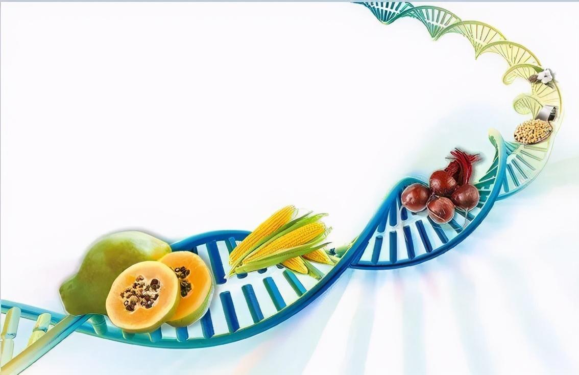 福兮?祸兮?专家带来转基因安全问题真相权威解读