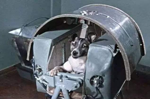 第一个进入太空的狗,升空前就知回不来,死亡真相也被隐瞒45年