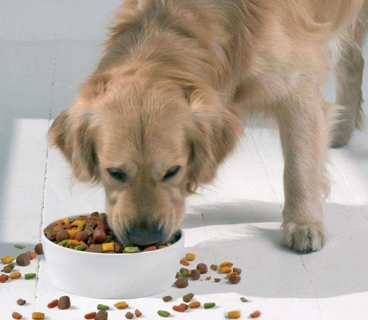 """狗狗最简单的5个""""愿望"""",全部实现,才算是""""狗生""""圆满"""