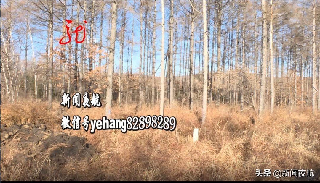 抢种耕地、毁林八百多亩!卫星航拍证据确凿,双鸭山这名农民竟还百般狡辩