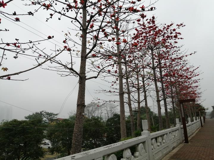 邕江边那一排临风怒放的木棉,一树火焰似的繁花,红艳而炽烈