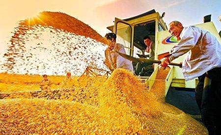 """由粮食资源大省向粮食产业强省转变看河南如何借""""链""""谋变"""