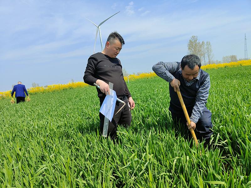 土壤改良的关键在哪里?如何进行土壤改良?