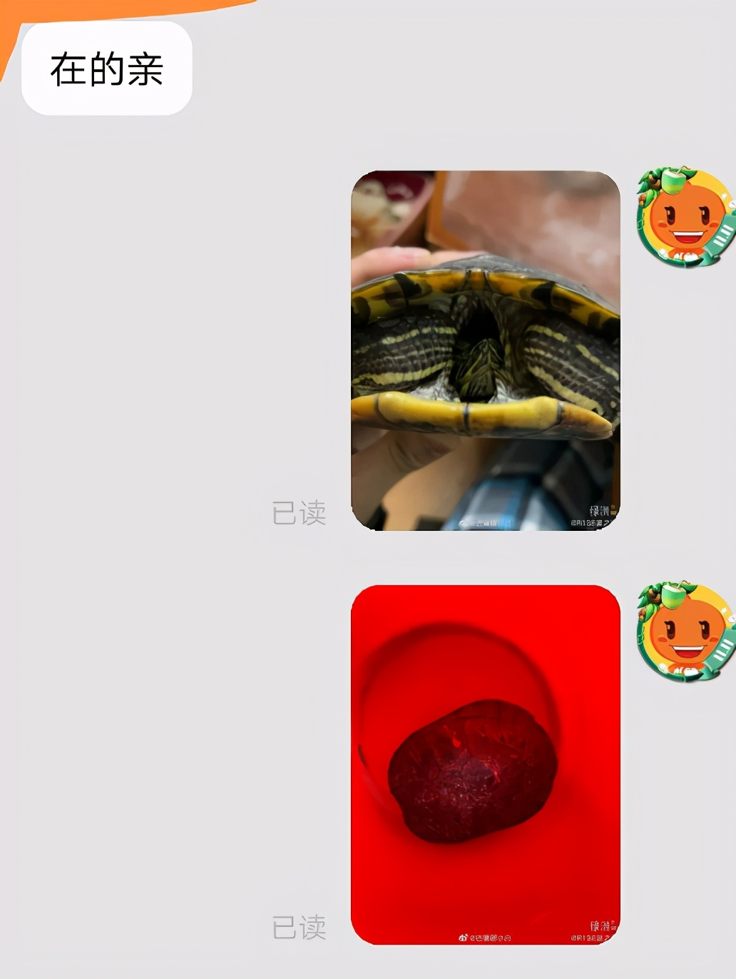 R1SE夏之光自称放生乌龟,却因没有常识被嘲,商家一句话戳穿