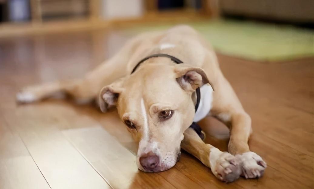 当主人出门之后,狗狗独自在家会干些什么呢?