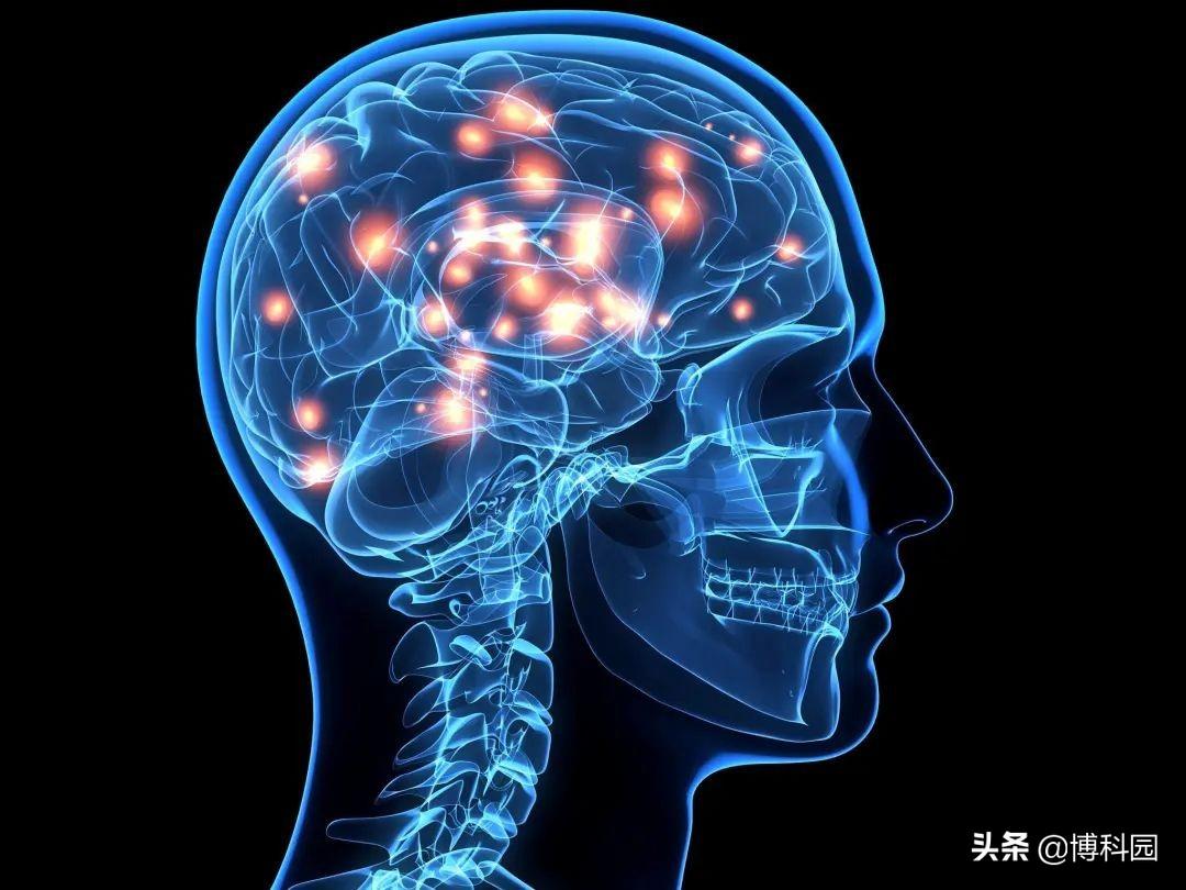 用物理学来理解意识的奥秘,物理学家开辟一种测量意识的新方法