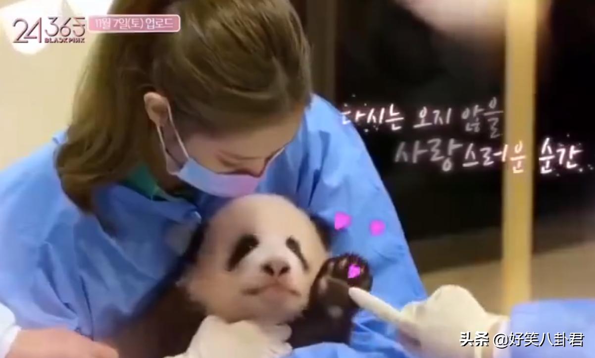 又见双标:金子涵带妆吻海豚被骂惨,韩国女艺人带妆抱熊猫很无辜