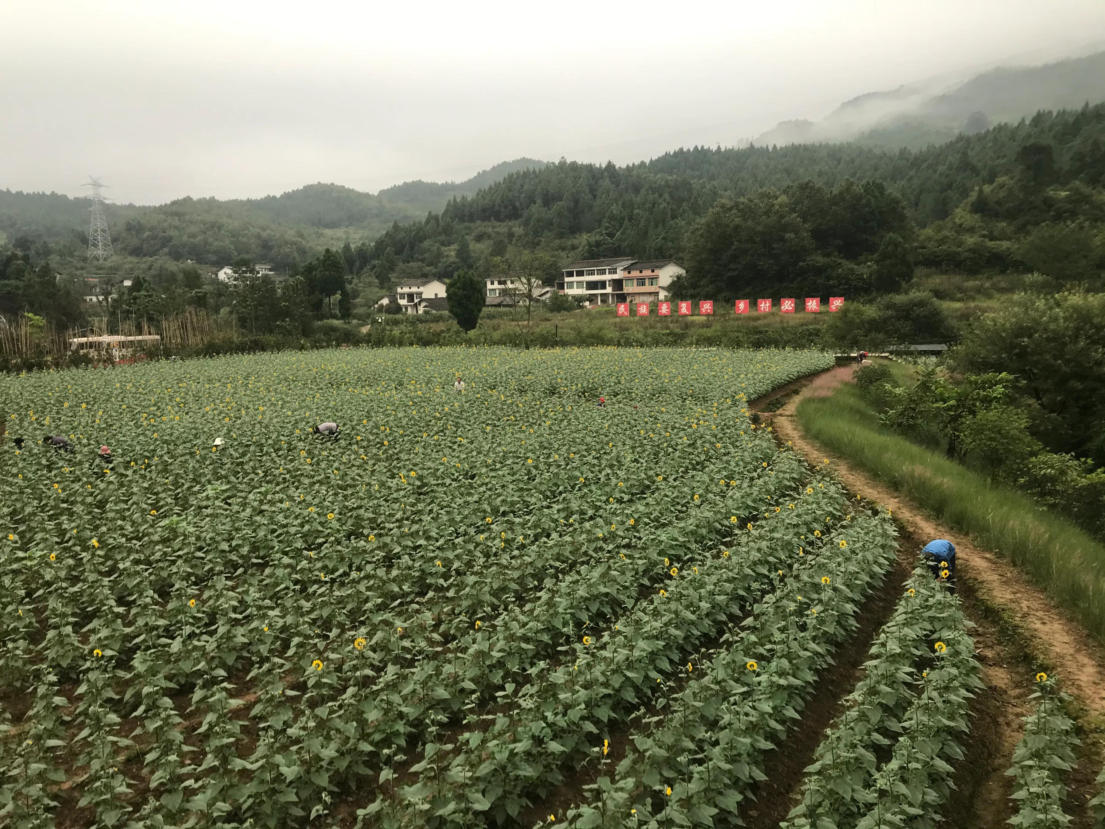 广元女儿节报道6:剑阁县双旗美村华侨城助力开启乡村发展新模式