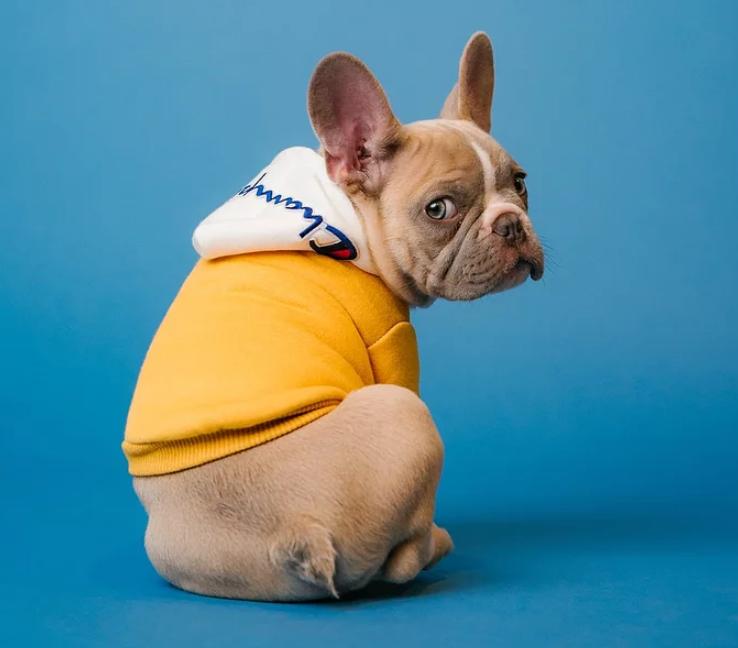 2023年宠物消费规模达4000亿,宠物电子产品能火起来吗?