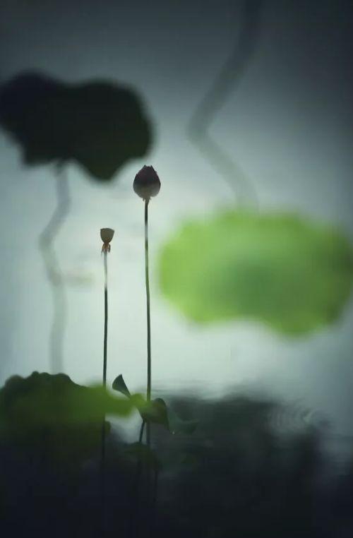 人间最美是相思 几首情词 几首情诗-第12张图片-诗句网