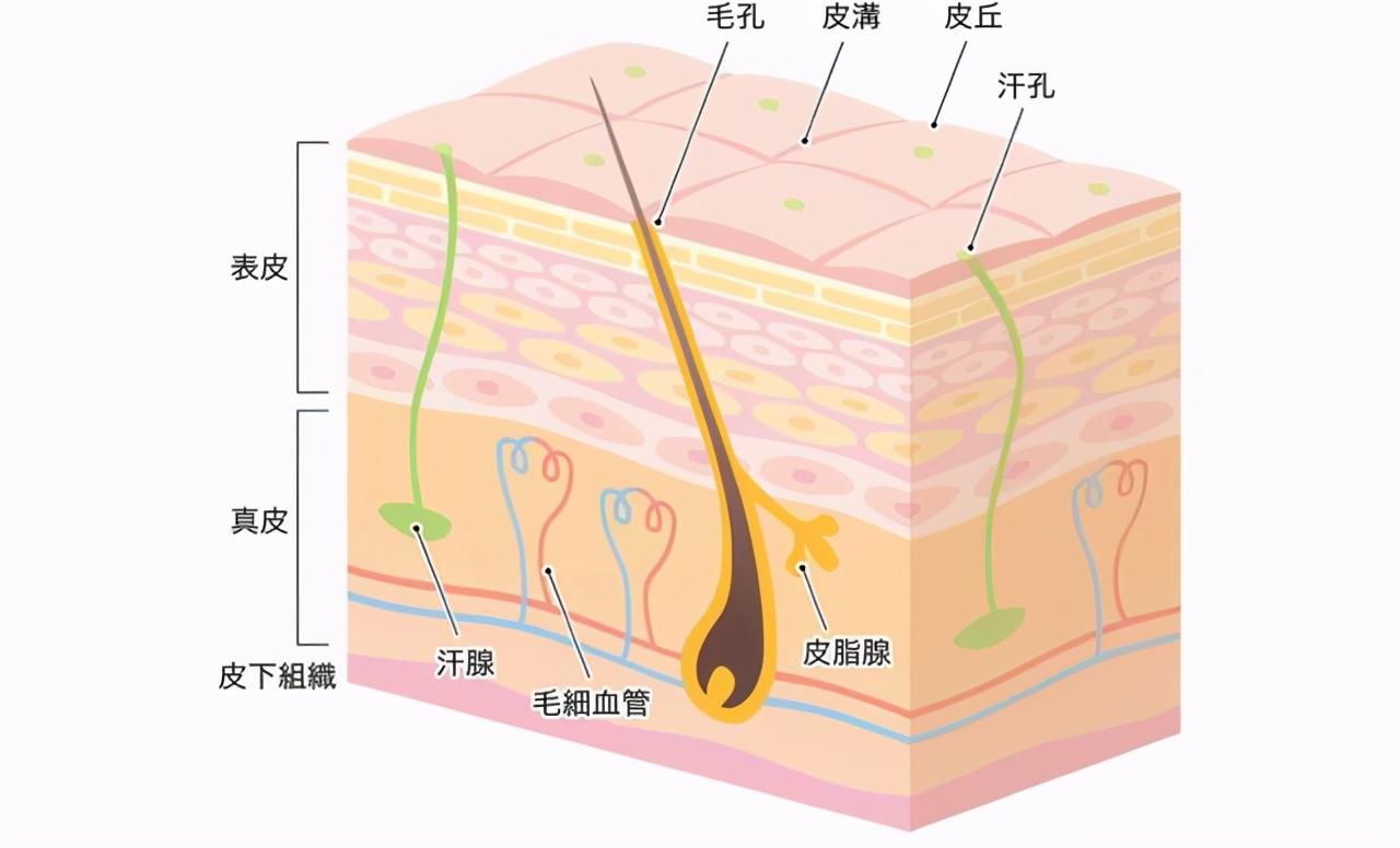 面膜多久敷一次才好?难怪护肤品不吸收,皮肤还是干燥起皮