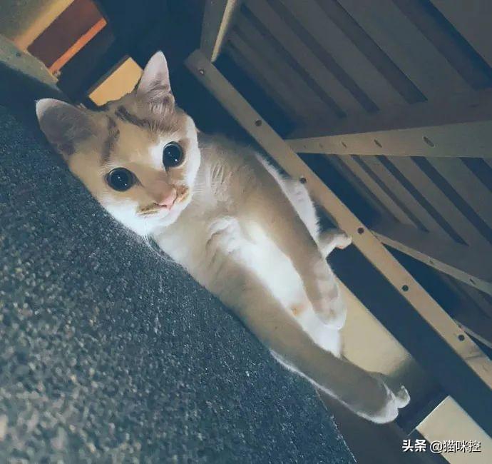 推主不小心拍下了猫打哈欠的瞬间,这真的太丑了