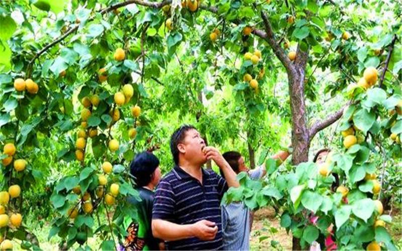 40岁的人,想在农村承包荒地种植果树,有哪些品种值得推荐?