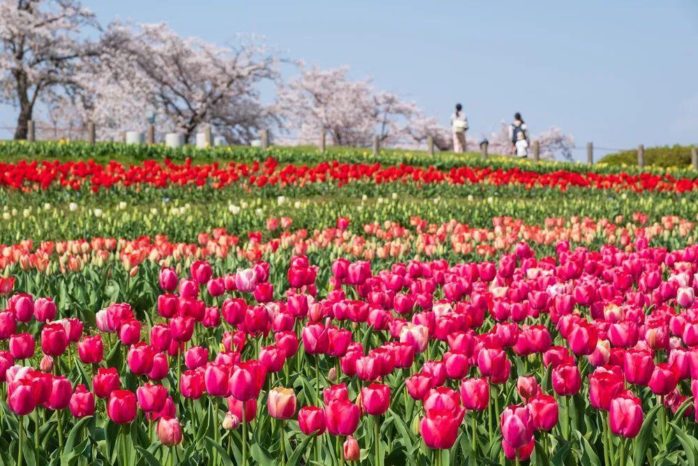 中国6大花市,全国最大的花卉批发市场介绍