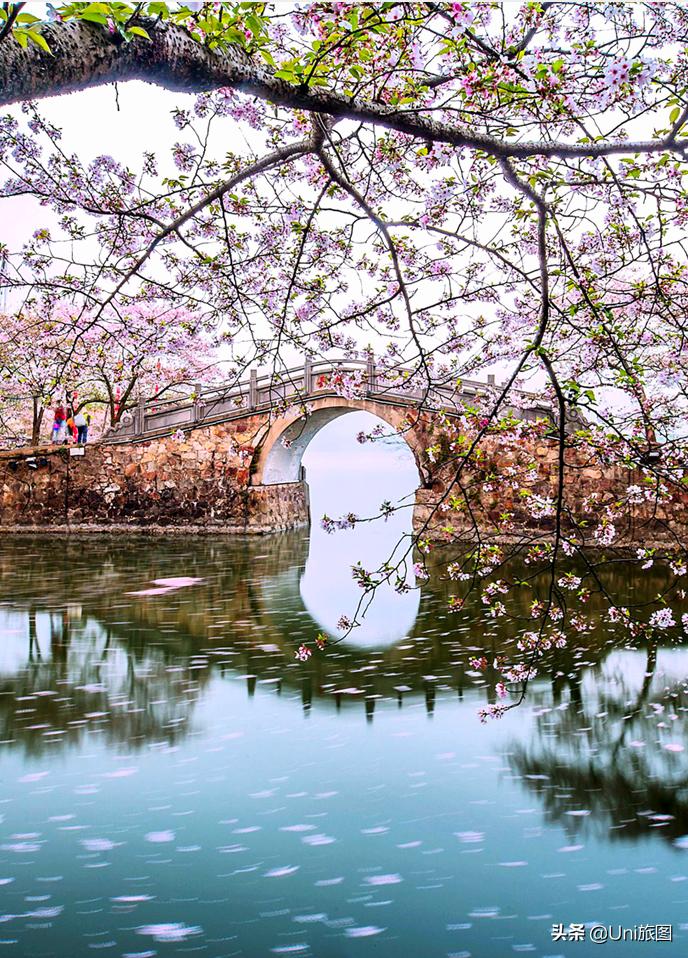 香港中國旅遊簽約攝影師趙永清:又是一年春來時,暖風輕撫桃花紅
