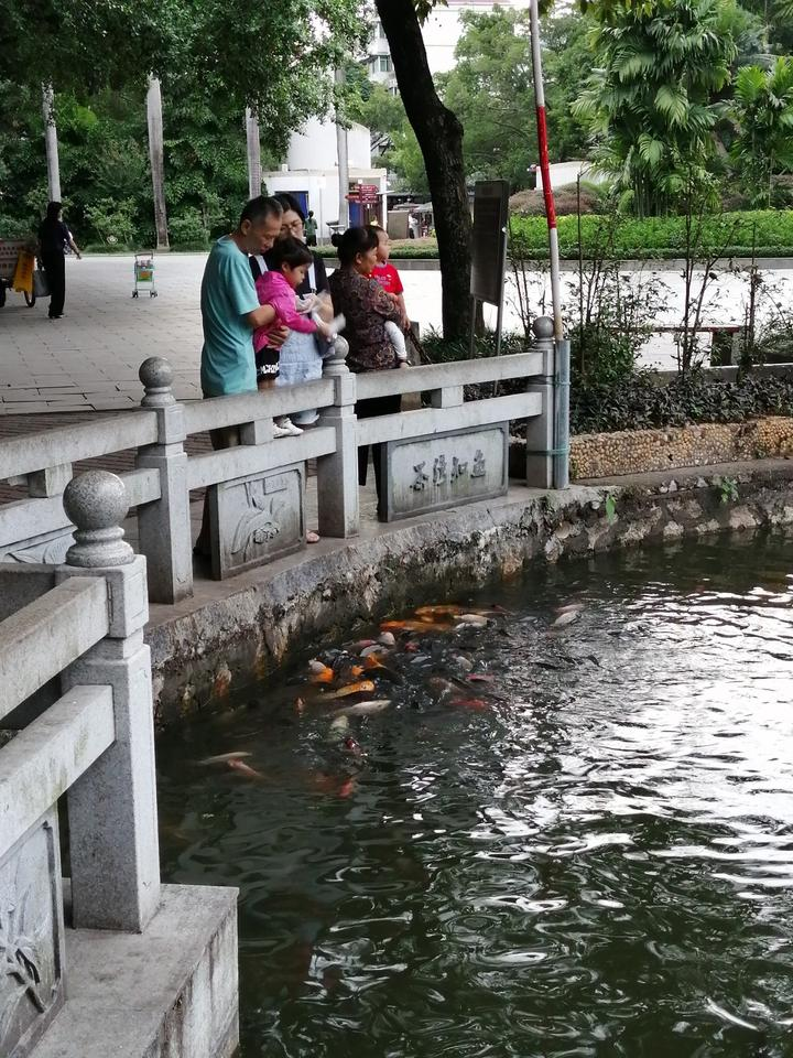 在南宁金花茶公园,喂麻雀真的比喂金鱼好玩