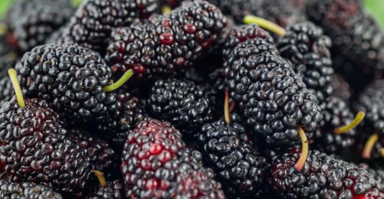 山东德州这四种特产,远近闻名,看看你吃过哪几种?