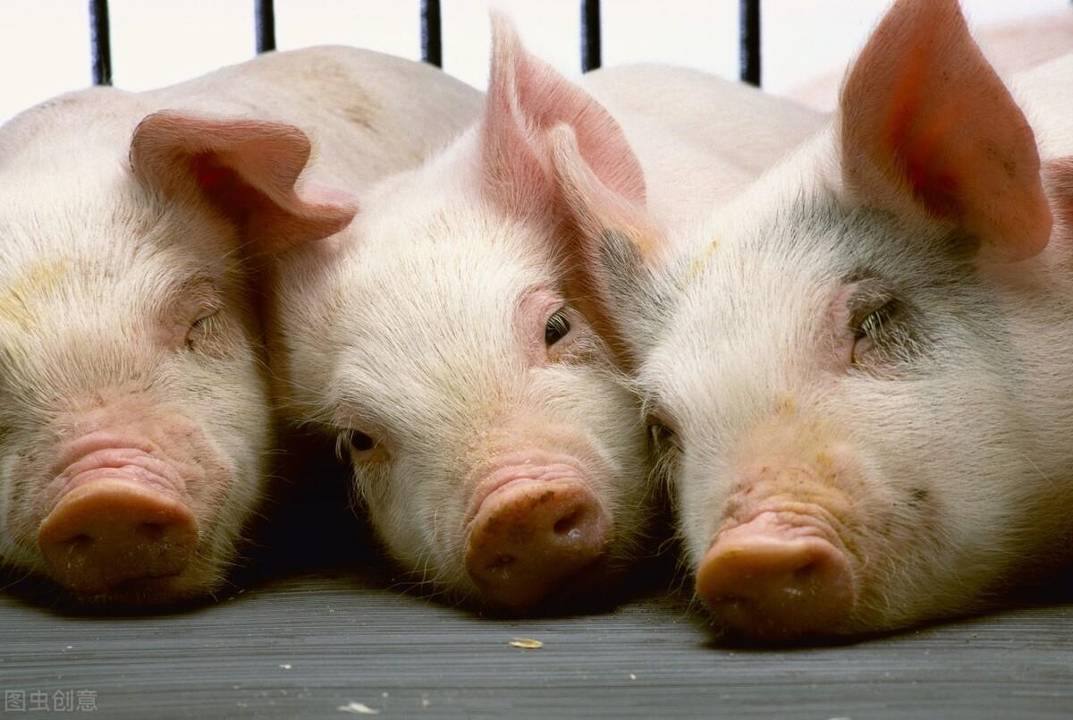 猪链球菌病有哪些类型?猪链球菌病的预防措施