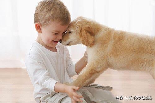 不是寵物需要我們,是我們需要寵物,養寵物的好處你知道嗎?